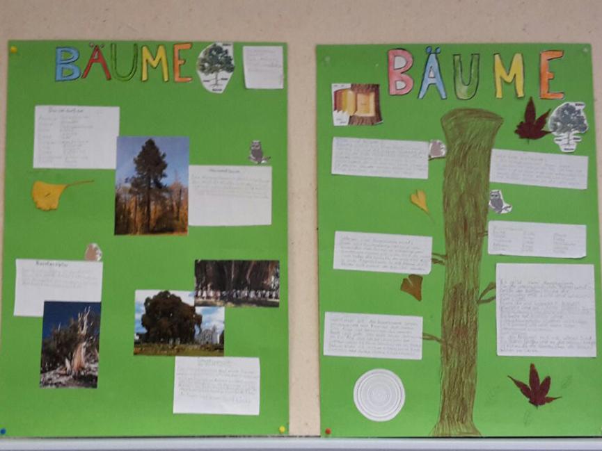 Info Bäume